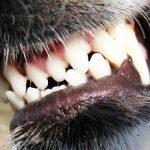 letselschade door hond