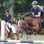 ongeluk paard en gewond geraakt